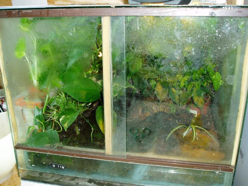 plantes terrarium grenouille