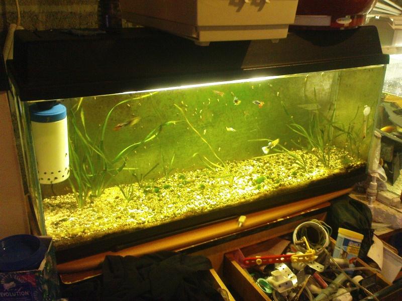 Mes bacs d 39 eau douce for Filtre bac a poisson