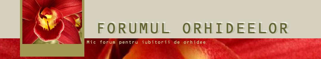 Forumul ORHIDEELOR