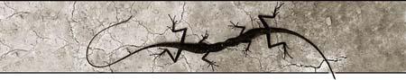 Reptielen en andere huisdieren