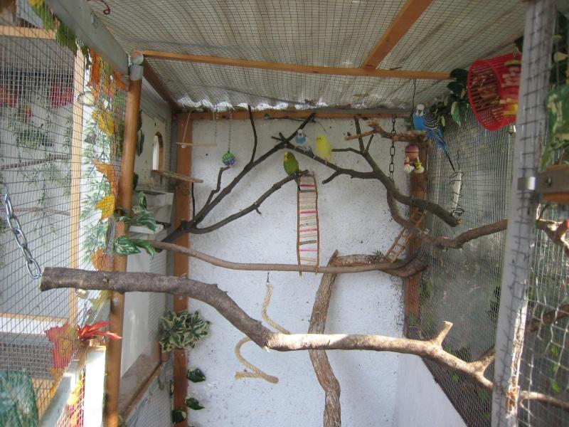 Afficher le sujet mes voliere et mes oiseaux - Voliere exterieur fait maison ...