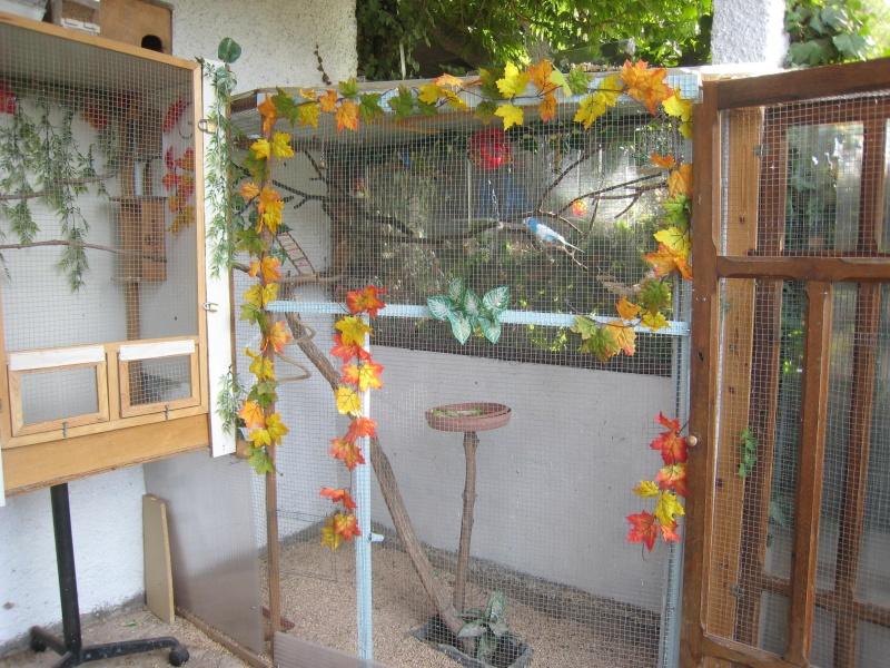 Afficher le sujet mes voliere et mes oiseaux for Voliere interieur pour perruche